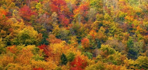 colorful leaves of trees in autumn in Westchester, New York