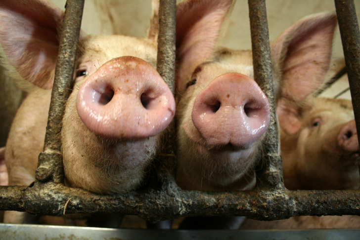 aggag laws � where the victimizers become victims � greenlaw
