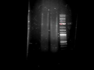 2016-03-10_DNA testcut hPQ