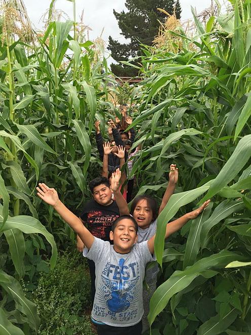 00StarlightEmeril_Corn-kids