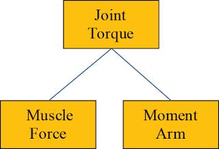 Joint Torque Principle