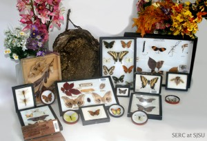 More than 20 species of butterflies are listed as endangered by the United States Fish and Wildlife Service, learn more about them before they are extinct with these handy demonstration kits
