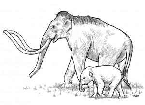Sketch of Columbian Mammoths.