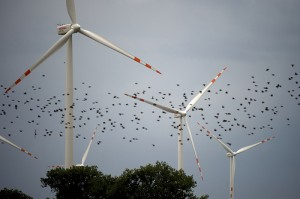 Photo of birds flying near wind turbines. Photo courtesy of Danish Wind Industry Association.