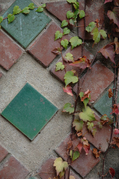 tile and ivy