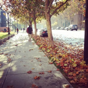 a photo taken on 4th street of leaves falling into the street and sidewalks of the SJSU campus.