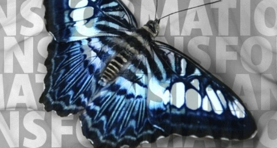"blue butterfly over ""transformations"""