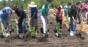 people lined up with shovels in hand planting veggies