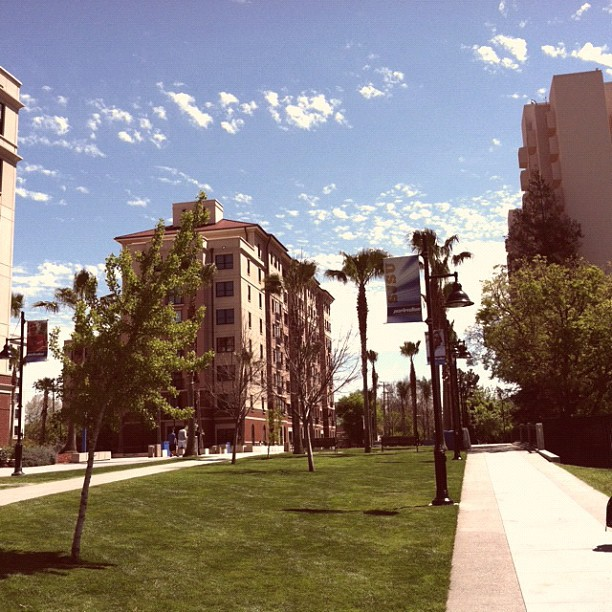 Photo of the SJSU campus: blue skys, green grass, five palm trees, and three buildings in background.