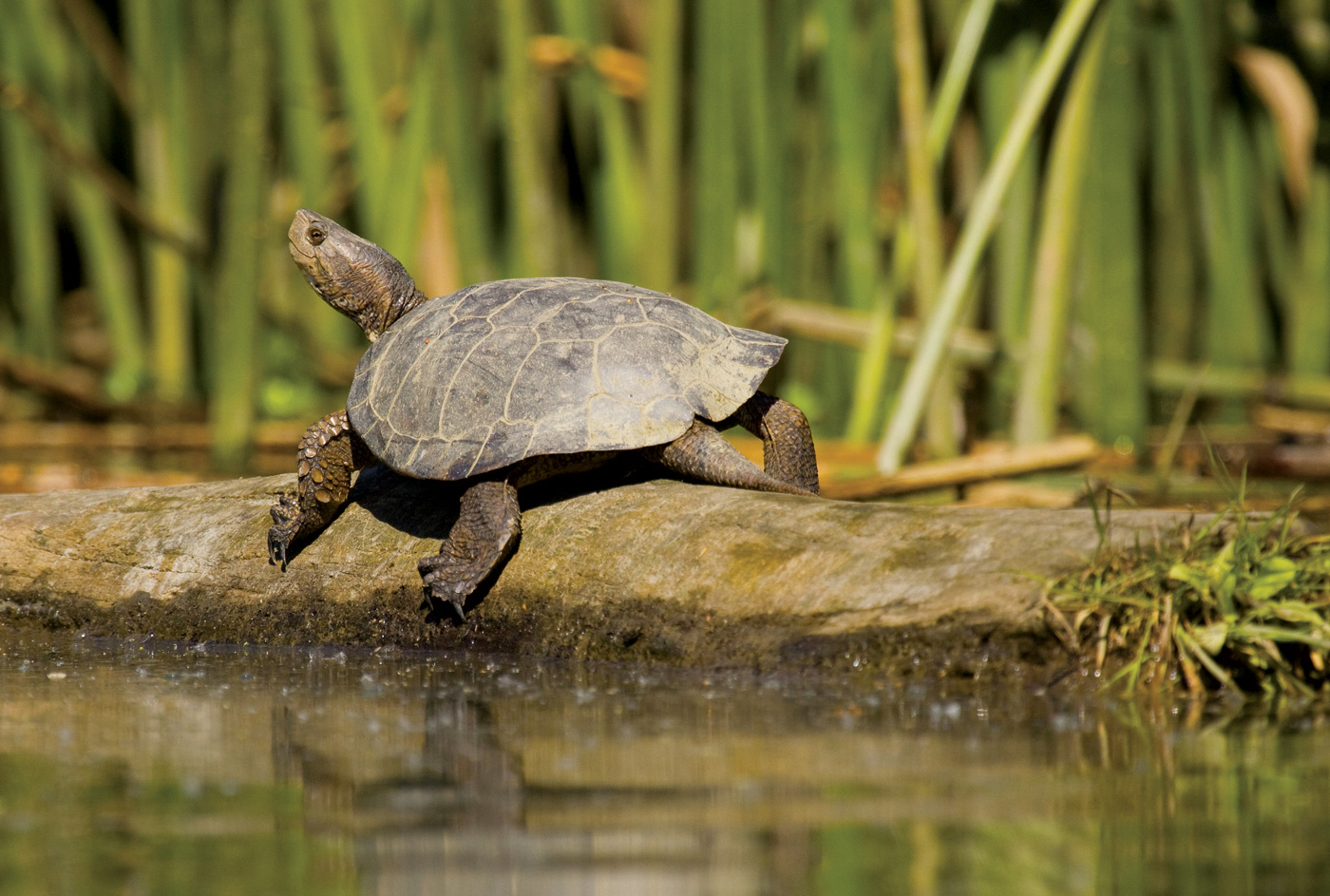 112715_Inpost_Turtle_01
