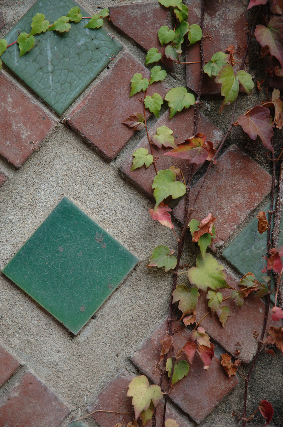 admissions tile and ivy image
