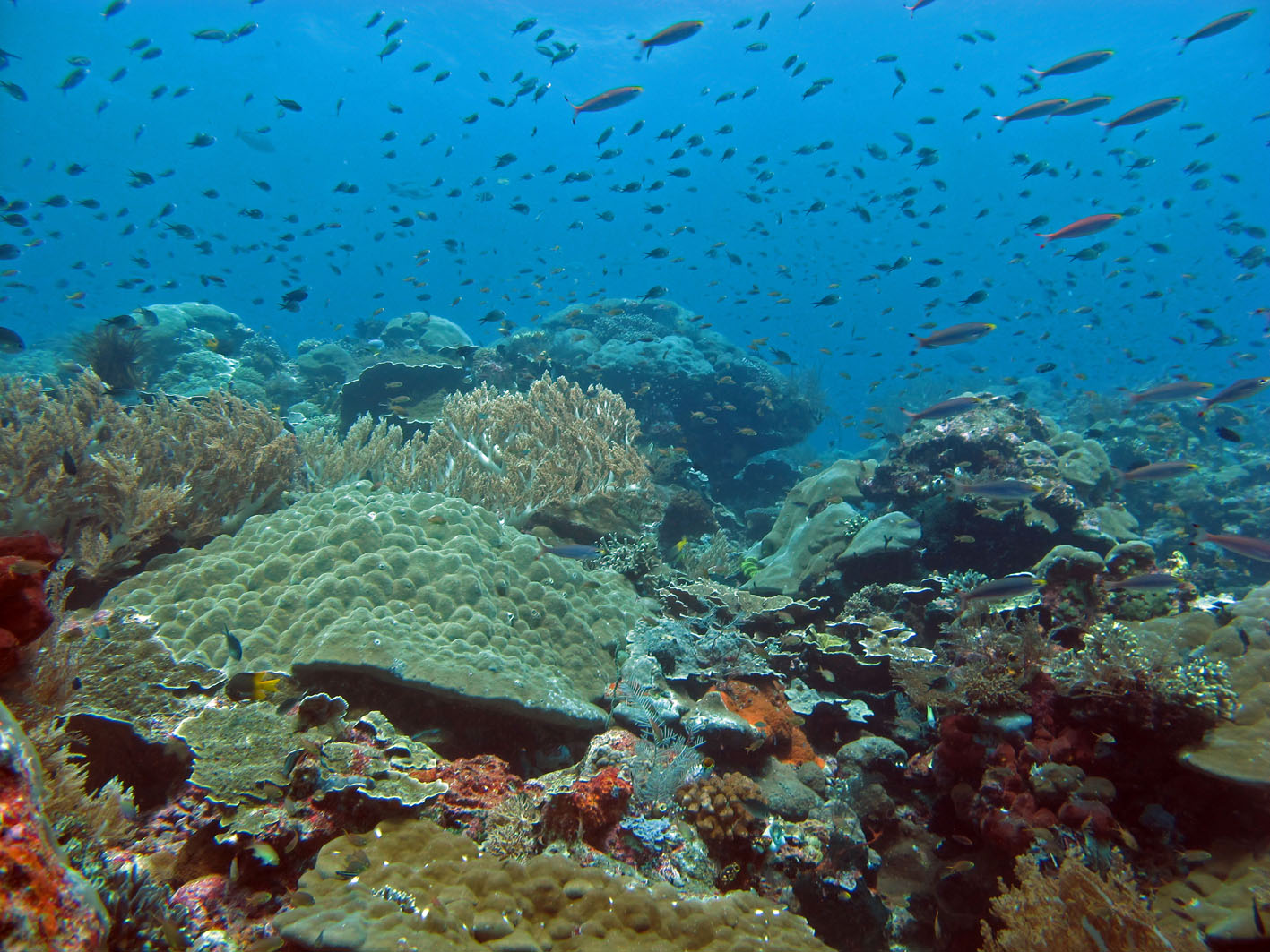 Raja Ampur Coral Triangle 2 photo Lakshmi Sawitri