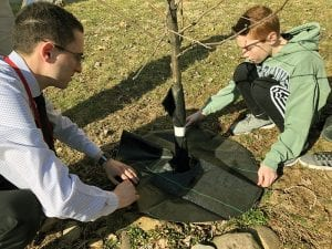 Adult and child wrapping base of tree with mat