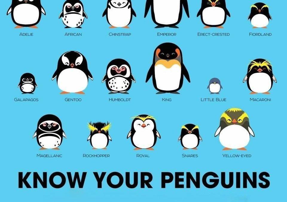 World Penguin Day 2021