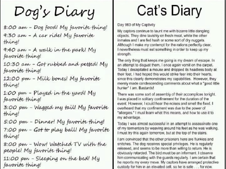 dogs and cats compare and contrast essay