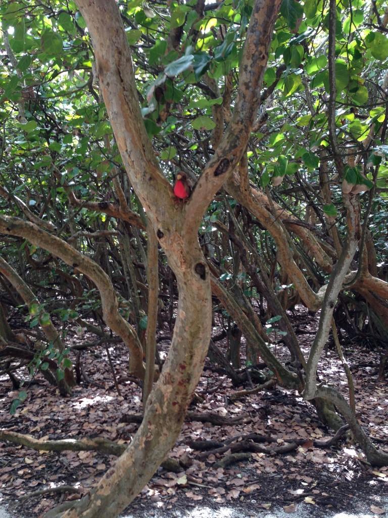 11. Sittin' in a Mangrove