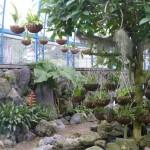 Invernadero dentro del Jardín Botanico