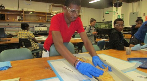 Urban Scholars: Dissecting