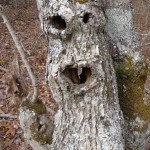 This is my favorite tree from today's trip. Look at that face.