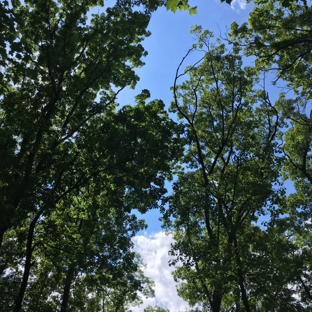 A view of the summer sky above Hassanamesit Woods