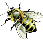 Michael-McHugh_Bee1-590x490