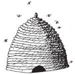 bees-culture