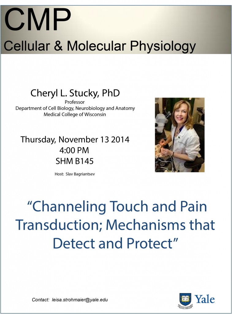 Cheryl Stucky CMP Flyer