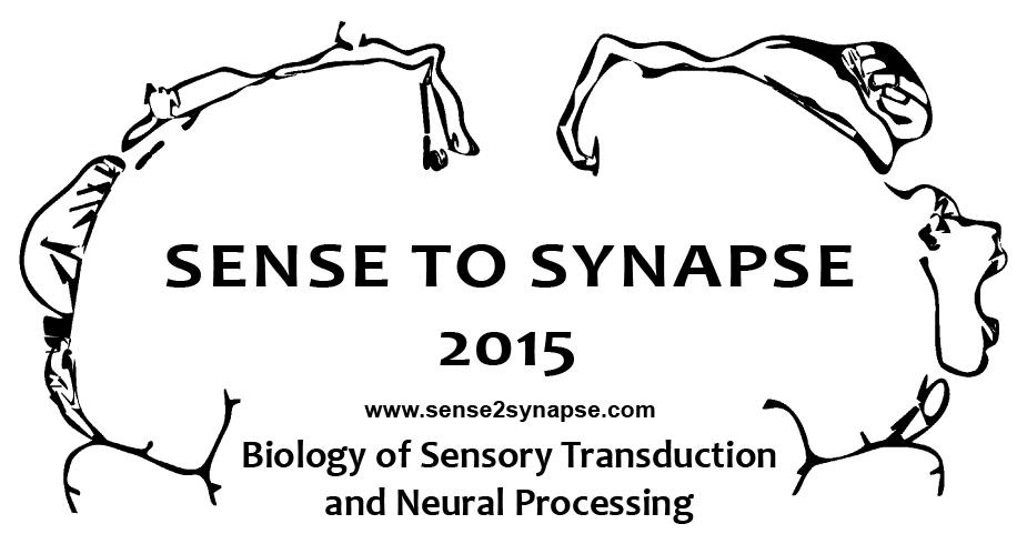 2015-04-11 Sense to Synapse logo