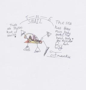 Frankie's snail