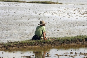 A survivor of Cyclone Nargis surveys his flooded farmland in the Ayeyarwady Delta region of Mayanmar.