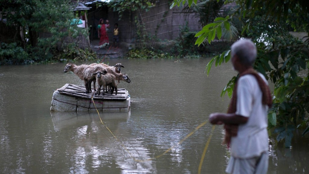 A villager rescues his sheep with a makeshift raft in India's Balimukh village.