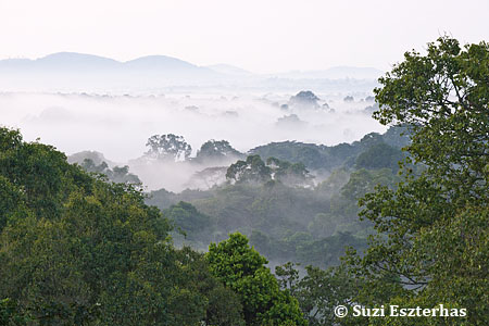 View of Kibale Forest, Western Uganda
