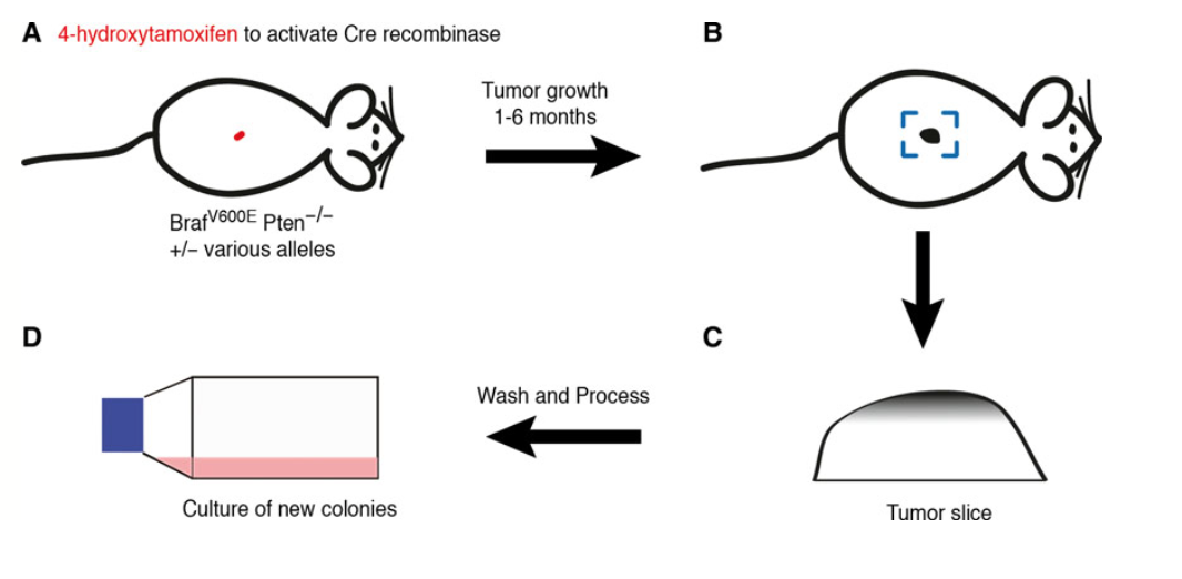 cell-line-generation