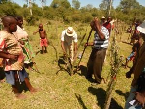 1-planting alluaudia
