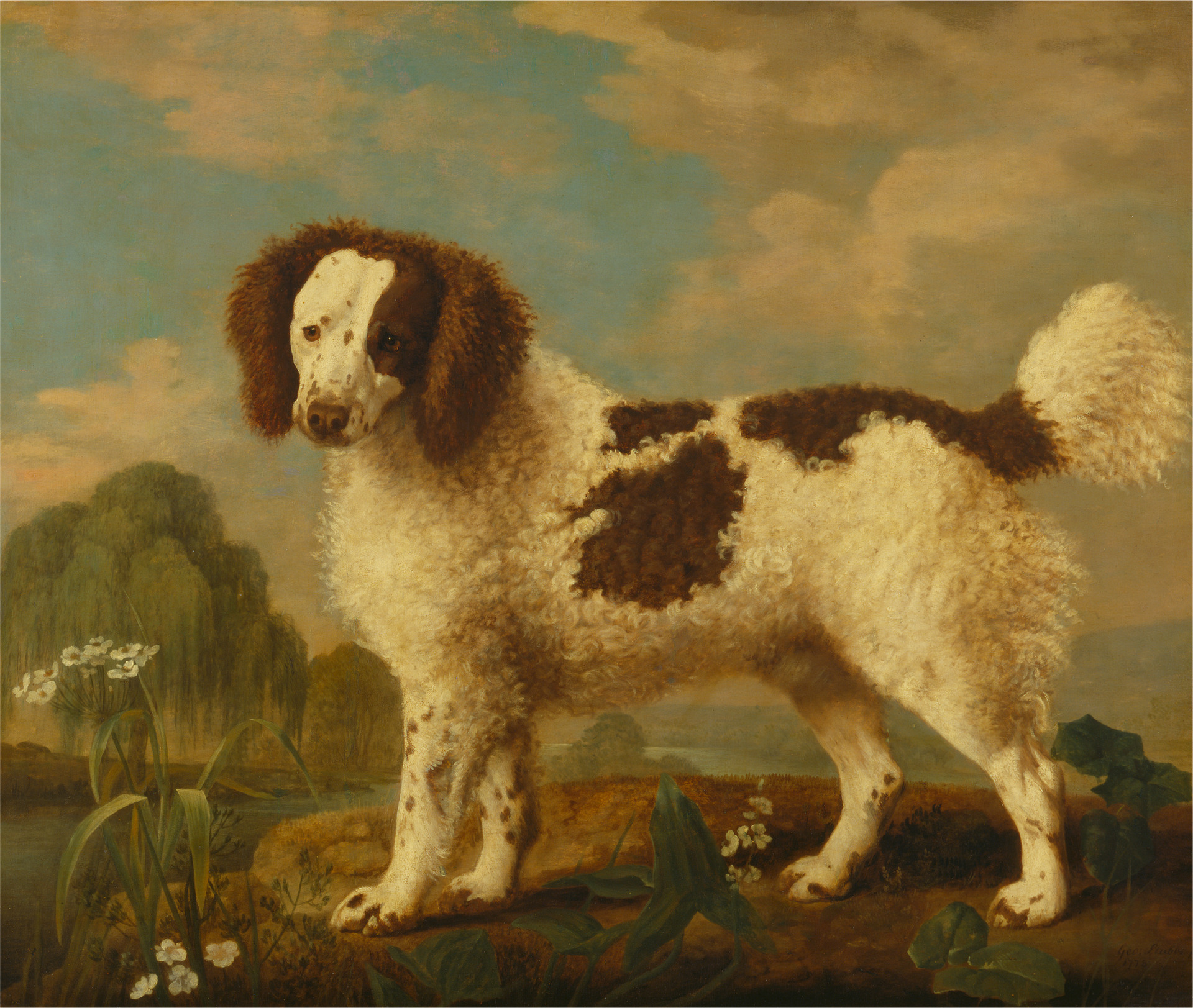 Brown and White Norfolk or Water Spaniel, George Stubbs, 1778