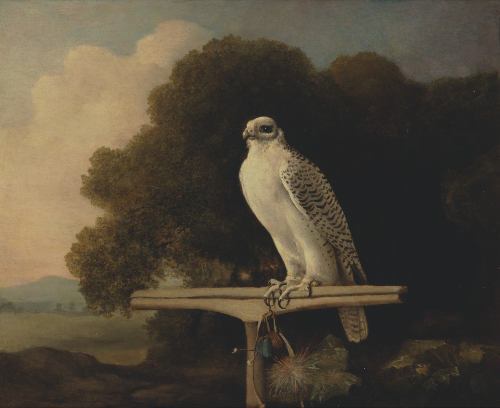 Greenland Falcon, George Stubbs, 1780