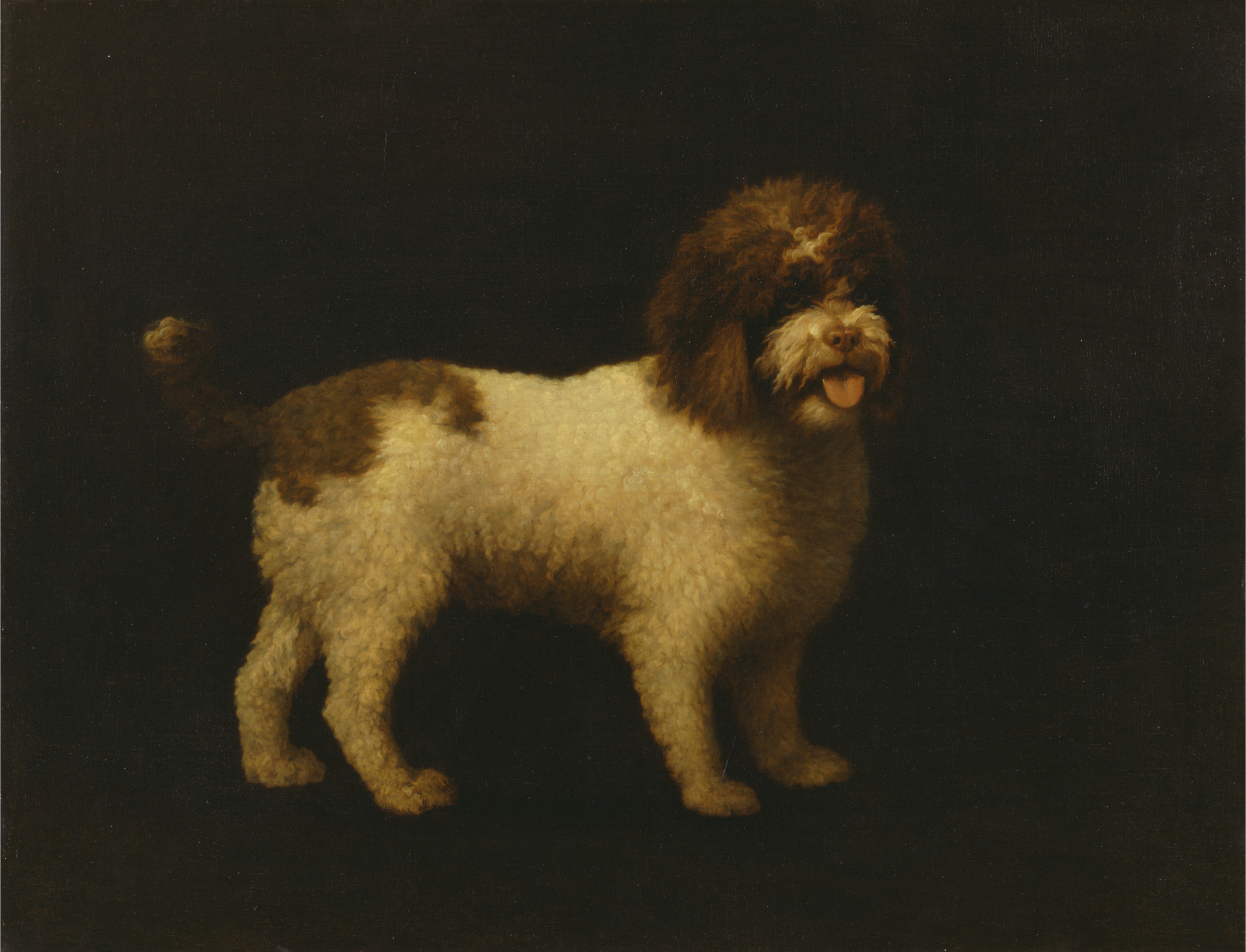 George Stubbs. Water Spaniel. 1769.