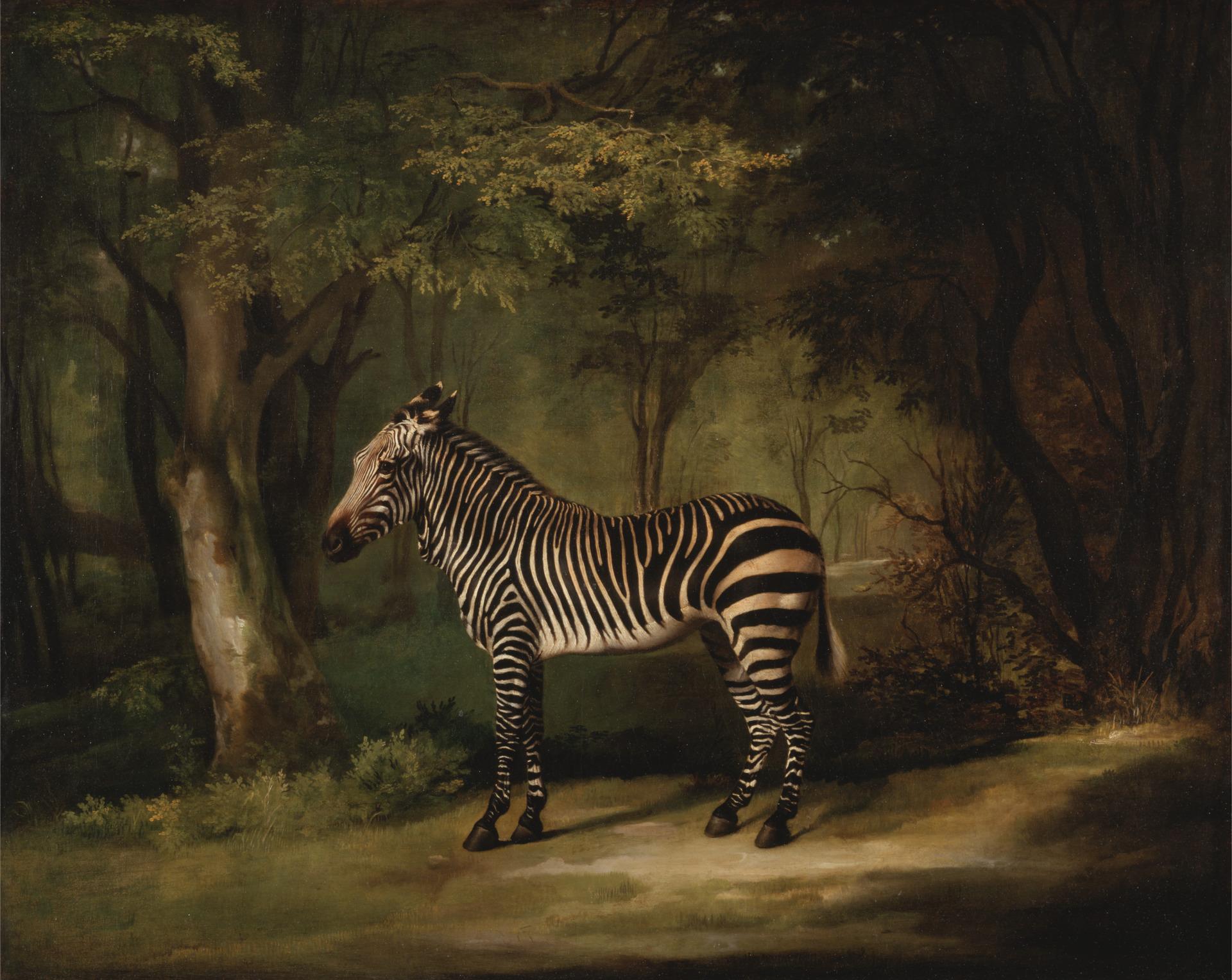 George Stubbs. Zebra. 1763.