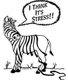 Stressed our zebra