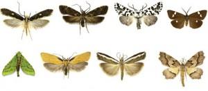 Moths_480(3)