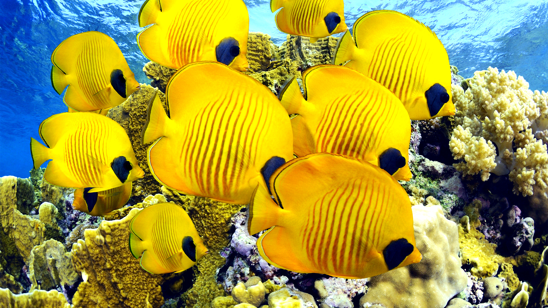 tropic fish - photo #26