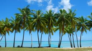 palm_trees1