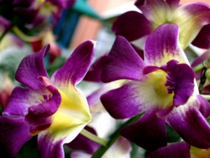 tropical flower 3