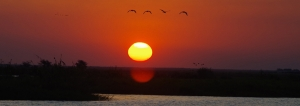 chobe-sunset-pan