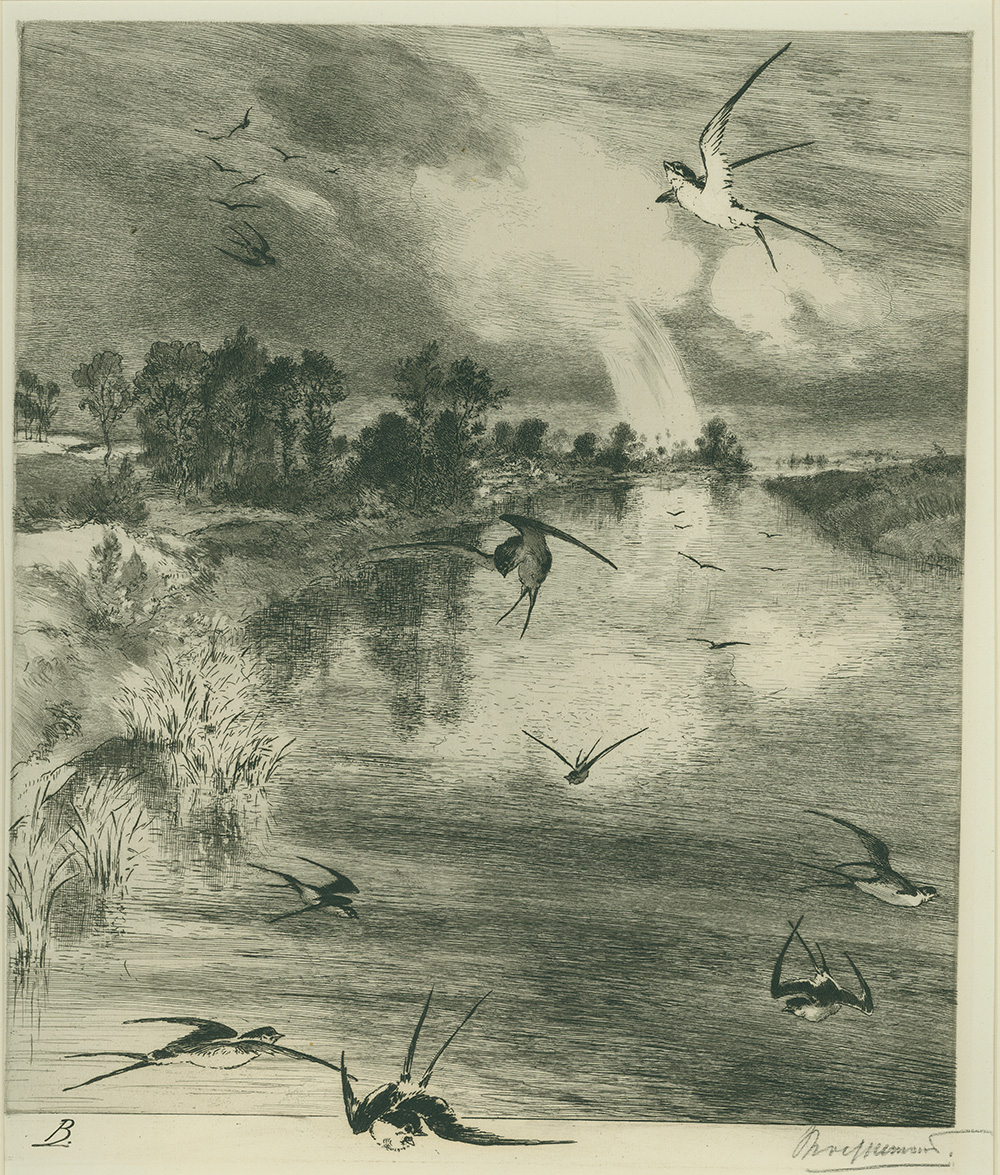 Swallows in Flight by Felix Bracquemond