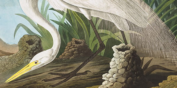 "John James Audubon's ""Magnificent Obsession"""