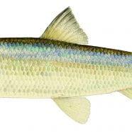Adirondack Fish Stories