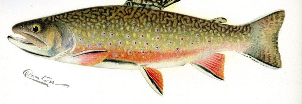 Fish of the Adirondacks