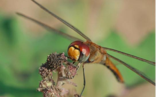 Dragonfly Eyes and Grasshopper Saddles