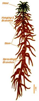 sphagplant